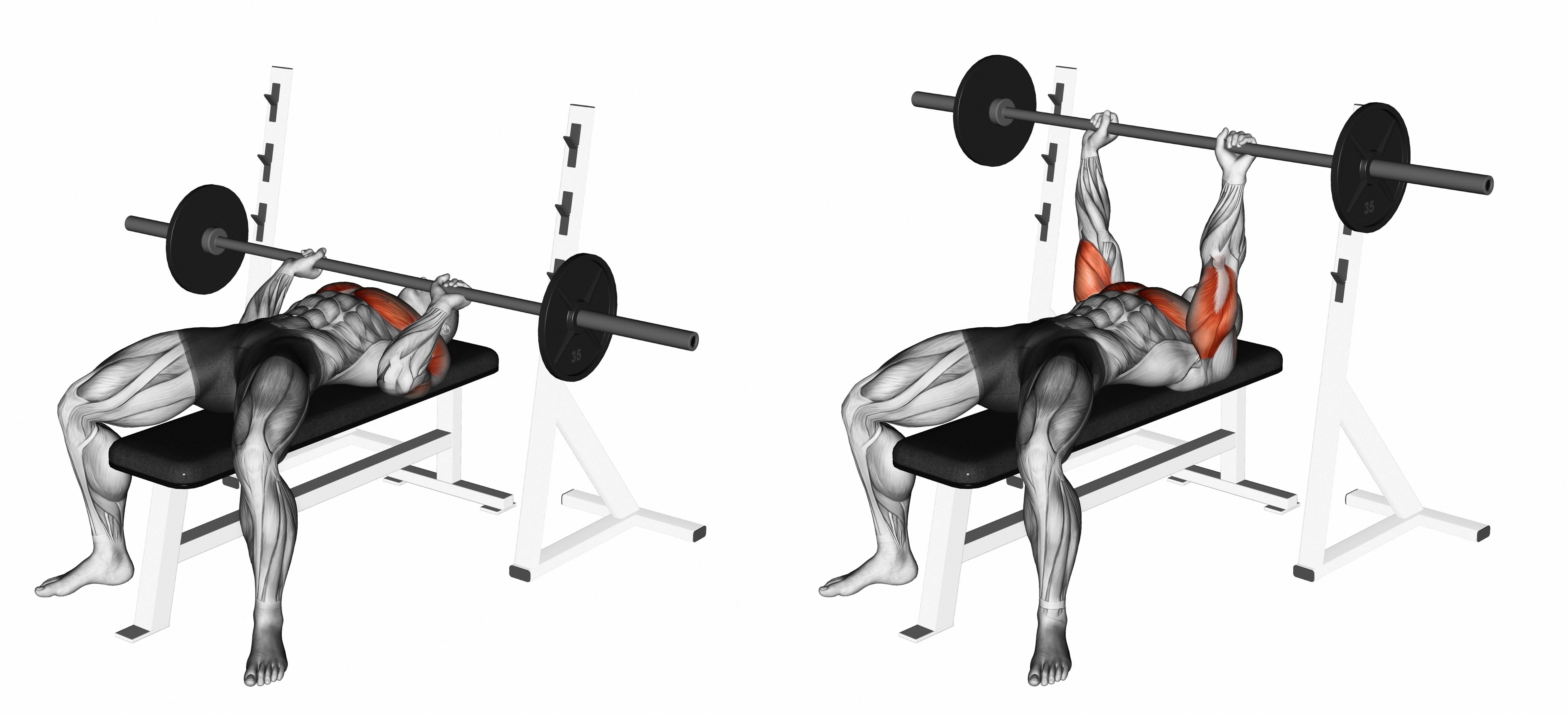 Best 5 Chest Exercises For Men - Build Strong Chest |Flat Bench Press Muscles Worked