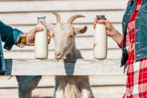 Goat's Milk Whey Protein goat